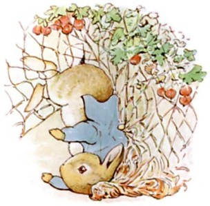 peterrabbit13