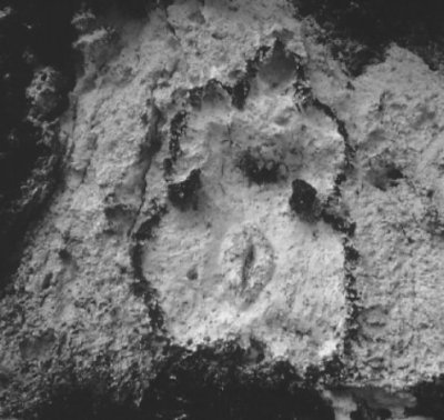 ana-mendieta-stone-women-900x450 (2)